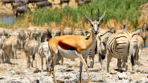 5-Day Family Friendly Tour of Etosha from Windhoek, Windhoek