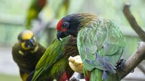 Kuala Lumpur Private Half Day Family Tour with Nature Birds and Butterflies, Kuala Lumpur, Nature &...
