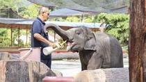 Private Day Tour to Elephant Orphanage Sanctuary Deer Land And Batu Caves, Kuala Lumpur, Day Trips