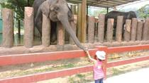 Private Day Tour to Elephant Orphanage Sanctuary, Pahang, Private Sightseeing Tours