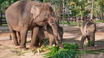 Private Day Tour to Elephant Orphanage Sanctuary, Pahang