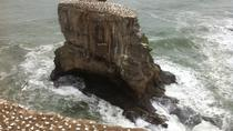 West Coast Gannet Colony and Wine Tour from Auckland, Auckland, Day Trips