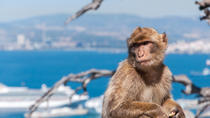 Shore Excursion: Rock of Gibraltar Tour, Gibraltar
