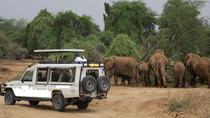 13 Days Best of Kenya Wildlife Safari Trail, Nairobi, Multi-day Tours