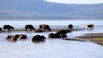 2 Day Tour Lake Nakuru Hells Gate and Lake Naivasha From Nairobi, Nairobi, Multi-day Tours