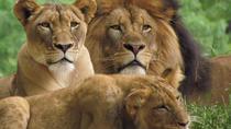 3 Days Masai Mara Camping Safari All Inclusive, Nairobi, Multi-day Tours