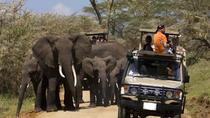 4-Day Tanzania Camping Safari to Lake Manyara, Serengeti, and Ngorongoro Crater, Arusha, Multi-day...
