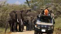 4days Tanzania Camping Safari to Lake Manyara Serengeti and Ngorongoro Crater, Arusha, Multi-day...