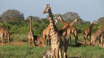 5days Tour to Amboseli Tsavo West and Tsavo East National Park, Nairobi, Multi-day Tours
