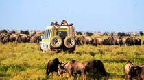 6-Day Tanzania Camping Safari: Lake Manyara, Serengeti, Ngorongoro Cater and Tarangire National ...
