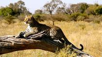 7days Magnificent Best of Kenya Wildlife Safari, Nairobi, Multi-day Tours