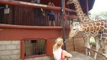 Day Tour From Nairobi to Karen Blixen David Sheldrick Elephant Orphanage and Giraffe Center,...