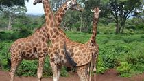 Day Tour From Nairobi to Karen Blixen David Sheldrick Elephant Orphanage and Giraffe Center, ...