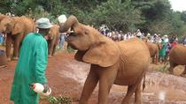 Elephant Orphanage and Giraffe Centre in Nairobi, Nairobi, Day Trips
