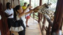 Karen Blixen Kazuri Beads and Giraffe Center Day Tour from Nairobi, Nairobi, Nature & Wildlife