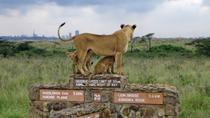 Nairobi National Park Safari from Downtown Nairobi, Nairobi, Nature & Wildlife