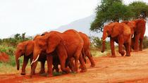 Volunteer Lumo Community Wildlife Sanctuary From Nairobi , Nairobi, Eco Tours