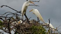 San Jacinto Hot Springs and Juan Venado Wildlife Reserve Boat Tour, León, Nature & Wildlife