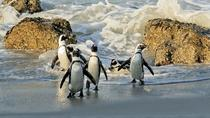 Cape Town to Cape Point Private Day Tour, Cape Town, Private Day Trips