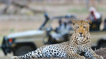 Libre de malaria Private Big Five Safari - 2 días, Cape Town, Multi-day Tours