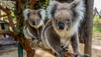 Cleland Wildlife Park Tour from Adelaide Including Mount Lofty Summit, Adelaide, null