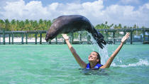 Fur Seal Encounter in Punta Cana, Punta Cana, Nature & Wildlife