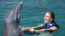 Punta Cana Explorer Dolphin Swim, Punta Cana, Swim with Dolphins