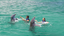 Punta Cana Extreme Swim plus Shark, Stingray and Fur Seal Encounters, Punta Cana, Swim with Dolphins