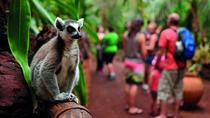 Oasis Park Entrance Ticket & Lemur Experience, Fuerteventura, Attraction Tickets