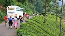 8 Nights 9 Days Experience The Backwaters of Kerala House Boats and Wildlife, Kochi, Multi-day Tours