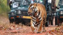 Explorar Rajasthan com Tiger Safari em Ranthambore, New Delhi, Multi-day Tours