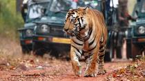 Explore Rajasthan with Tiger Safari at Ranthambore, New Delhi