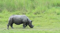 Explore the one horn Rhino with eco nature camp, Guwahati, Multi-day Tours