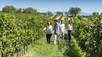 Torres Wine Cellars and Montserrat and Sitges Guided Day Tour from Barcelona with Optional Bacardi ...