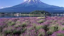 Katsunuma and Fuji Five Lakes Day Trip from Tokyo: Wine Tasting, Fruit Picking and Flower Fields,...