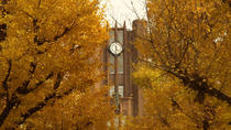 Autumn Leaves: Private Tokyo 4-Hour Walking Tour, Tokyo, Seasonal Events