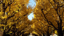 Autumn Leaves: Tokyo in Fall Full-Day Sightseeing, Tokyo, Day Trips
