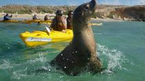 Penguin and Seal Island Kayak Tour, Western Australia, Kayaking & Canoeing