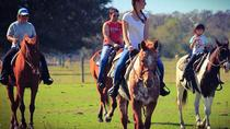 1-hour Casual Trail Ride, Sarasota, Horseback Riding