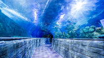 Malta National Aquarium Entrance Ticket, Malta, Attraction Tickets