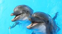 Dolphin and Seal show in Dubai Dolphinarium, Dubai, Attraction Tickets