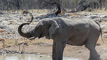 3-Hour Etosha National Park Game Drive, Namibie