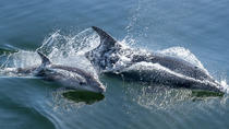 Half-Day Dolphin and Seal Watching Tour from Walvis Bay, Cape Town, Half-day Tours
