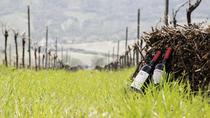 Provincia of Fermo Wine Tasting, Ascoli Piceno, Wine Tasting & Winery Tours