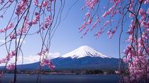 11-Day Sakura Cherry Blossom Tour from Tokyo, Tokyo, Walking Tours