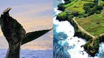 Whale Watch und Hamakua Coast Sightseeing Tour, Big Island of Hawaii, Dolphin & Whale Watching