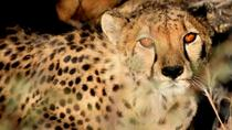10-Day Namibia Hightlights Guided Tour from Windhoek, Windhoek, Multi-day Tours