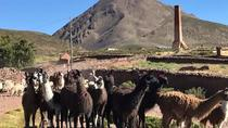 2 Tage: Private Tour zum PARQUE NACIONAL SAJAMA von La Paz, La Paz, Private Sightseeing Tours