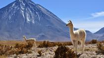 3 Days Tour Uyuni Salt Flats ending in San Pedro de Atacama Chile, Uyuni, Day Trips