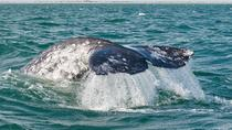 Coronado Islands Sea Wildlife Tour from San Diego, San Diego, Dolphin & Whale Watching
